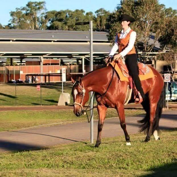 Q Horses For Sale western trained mare