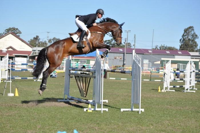 Showjumping Mare by Lux Z - PRICED TO SELL!