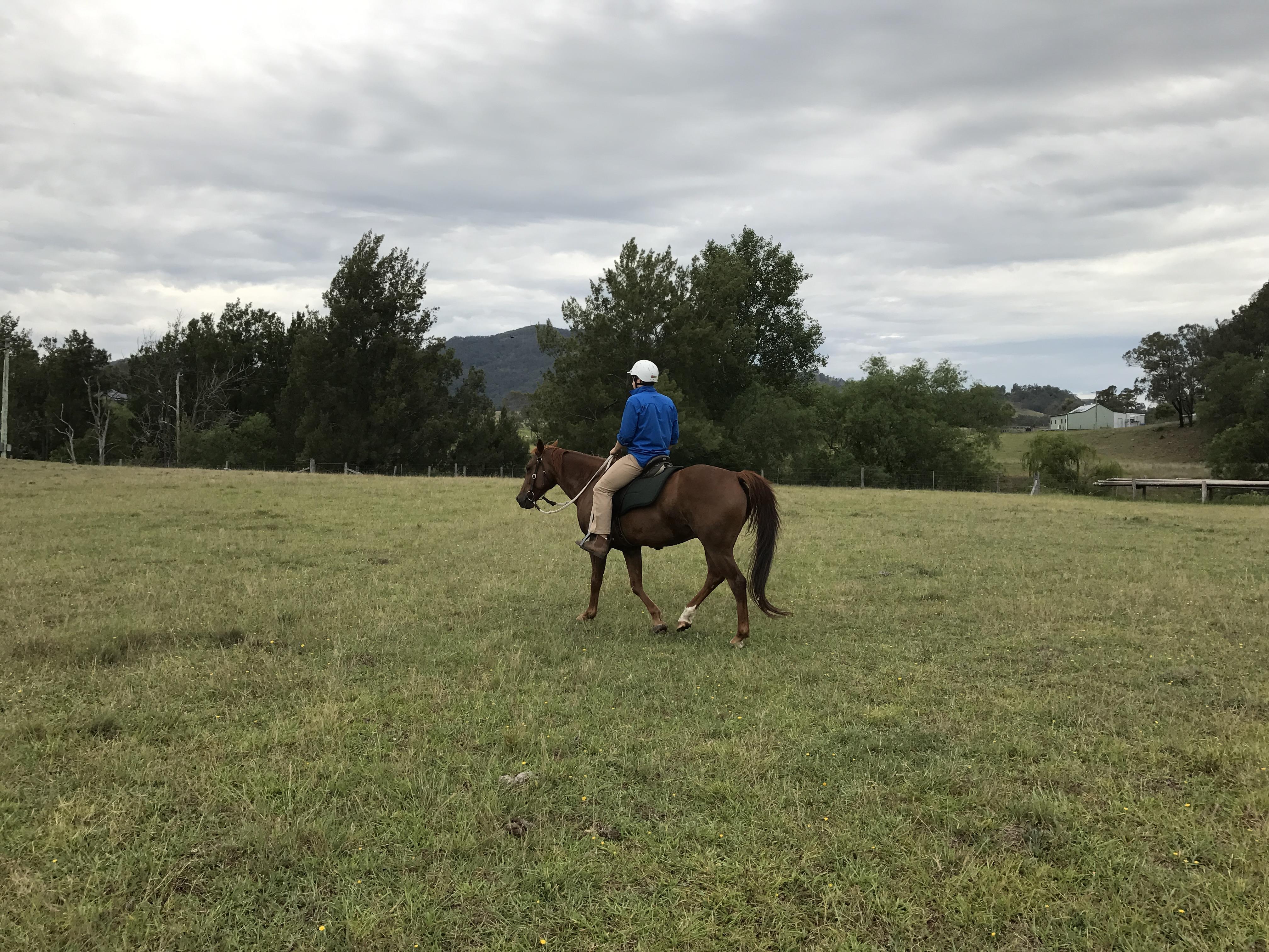 Quiet Quarter Horse