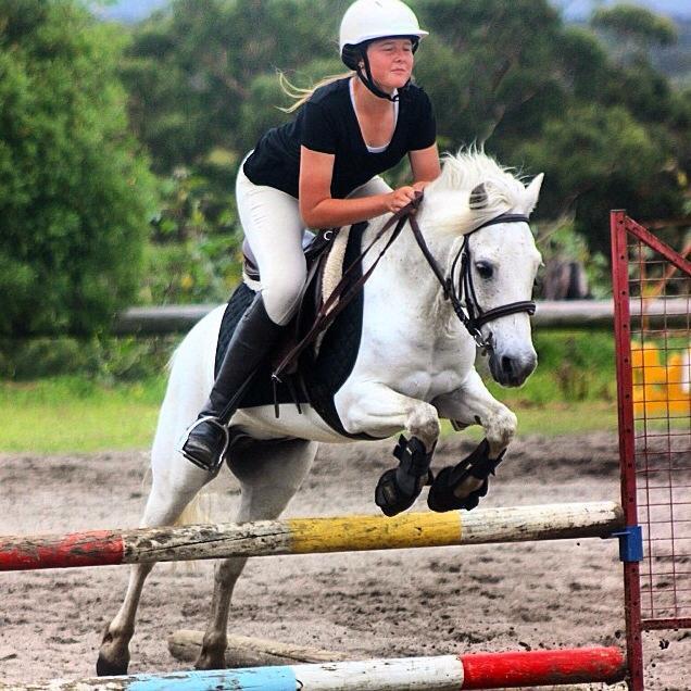 All rounder Grey Pony