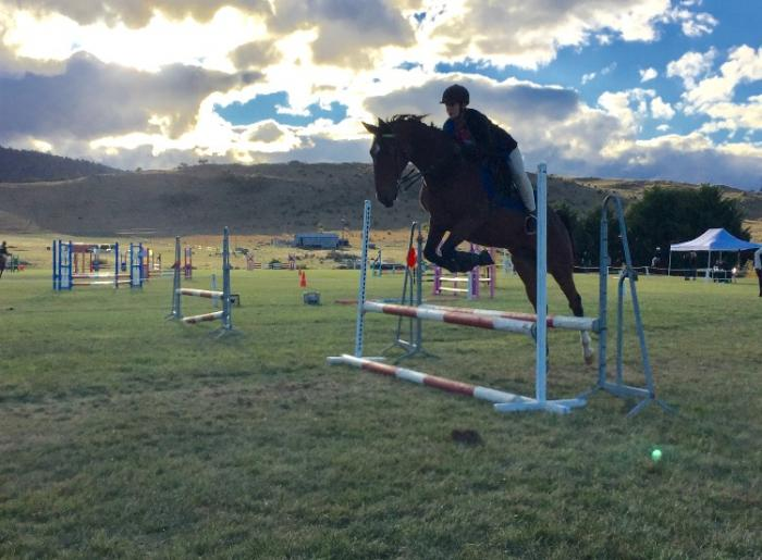 12 year old gelding bay, 14.2hh Beginner rider.