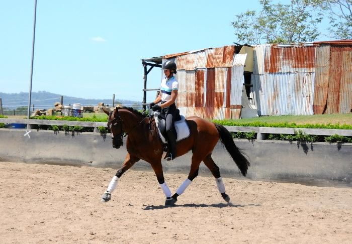 Flash 1* eventer training medium level dressage