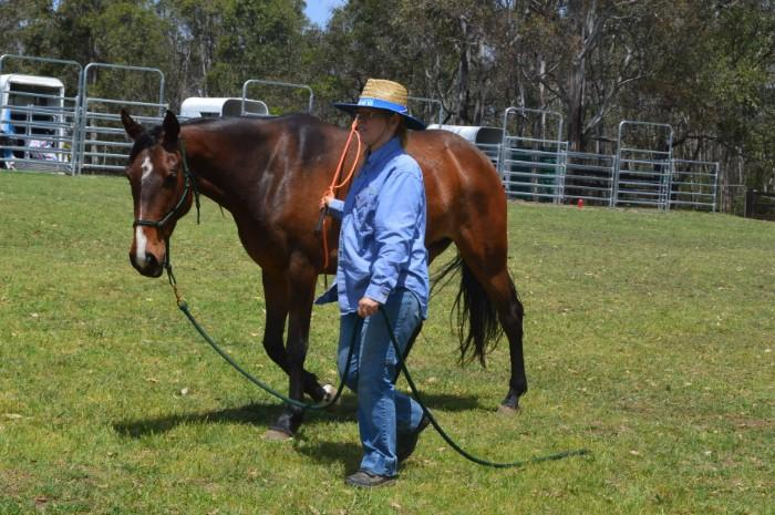 xstock horse 5 years old