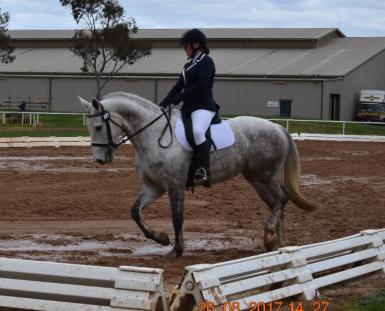 Dressage on sand in wet.jpg