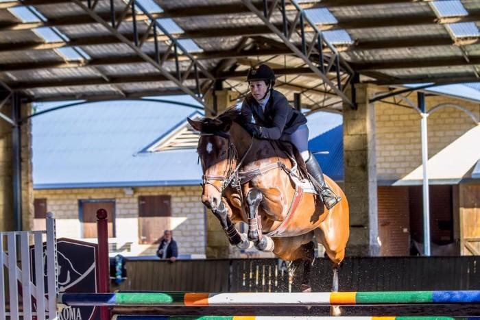 Bold Showjumper - World Cup Bloodlines