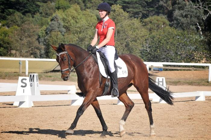 Stunning Warmblood Mare Dressage, Jump or Event