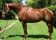 Escudo 1 mare in foal to Contenda