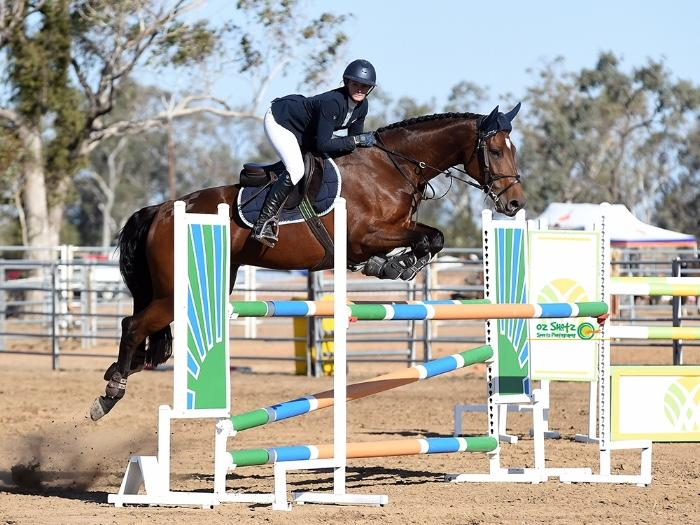 Beautiful Showjumping Mare