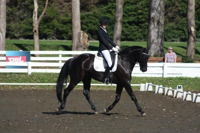 Talented dressage horse