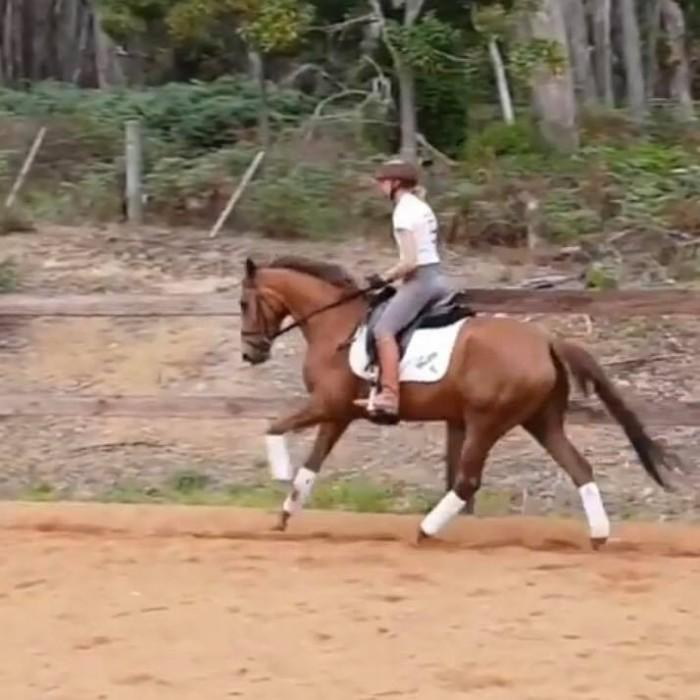 Quality Young Horse by Jazz POA