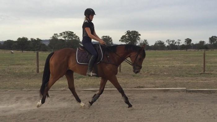 Promising young TB Gelding