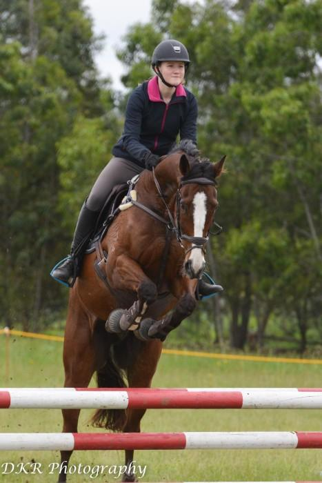 Ideal Dressage, Showjumping or Eventing Horse
