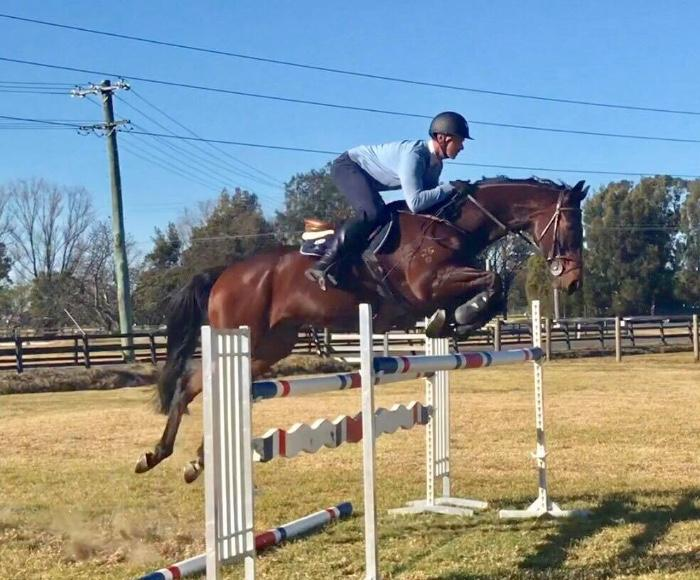 Great Junior / Amateur Showjumper