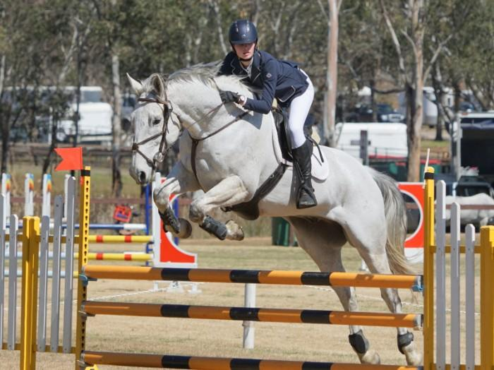 Irish Sport Horse Eventer