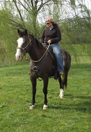 Talented Quarter horse for sale
