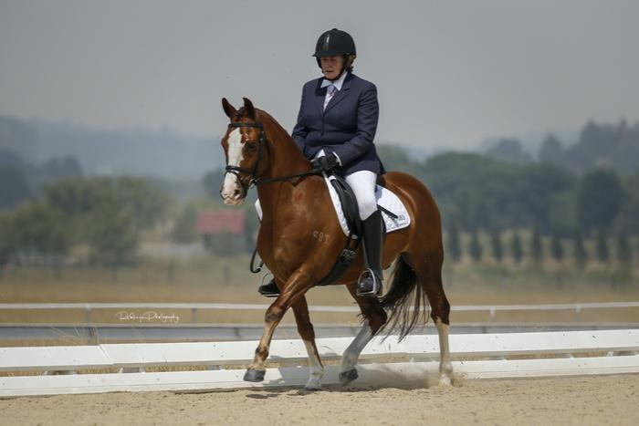 OUTSTANDING DRESSAGE PONY