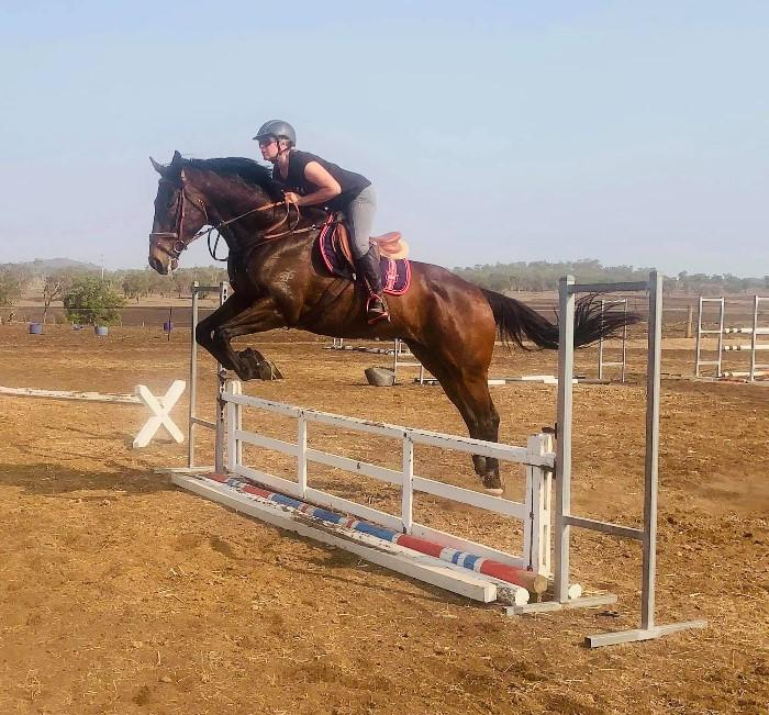 Potential Eventer/Showjumper Big 4 yr old!!!