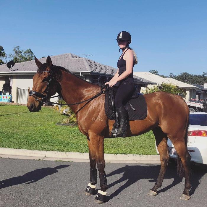 6yo Thoroughbred Gelding 17.3hh