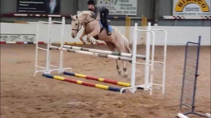 Palomino Thoroughbred Gelding