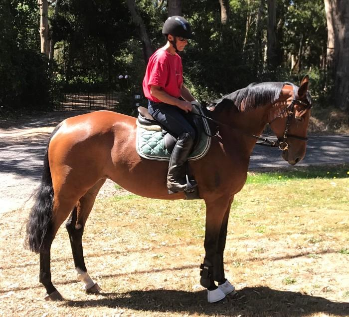 WARMBLOOD BROOD MARE