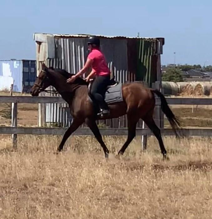 perfet first thoroughbred -Quiet, willing gelding