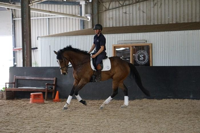Very Talented TB Gelding