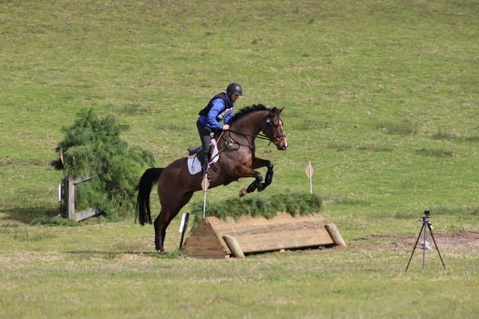 Young eventing gelding by Higgins