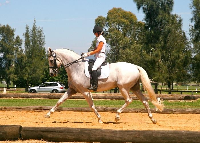 FEI gelding Serious Grand prix potential