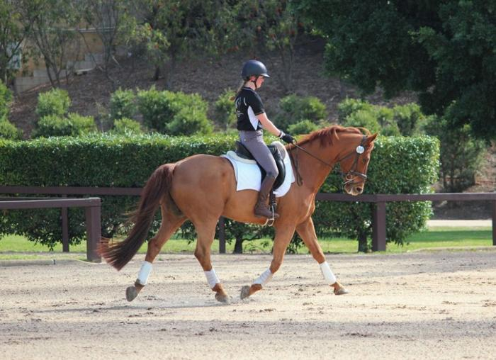 Price Reduced.Arlington Park FM - Dressage Gelding