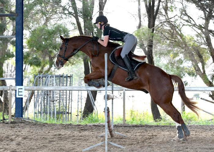 Skibbereen Neat Az English Riding Pony