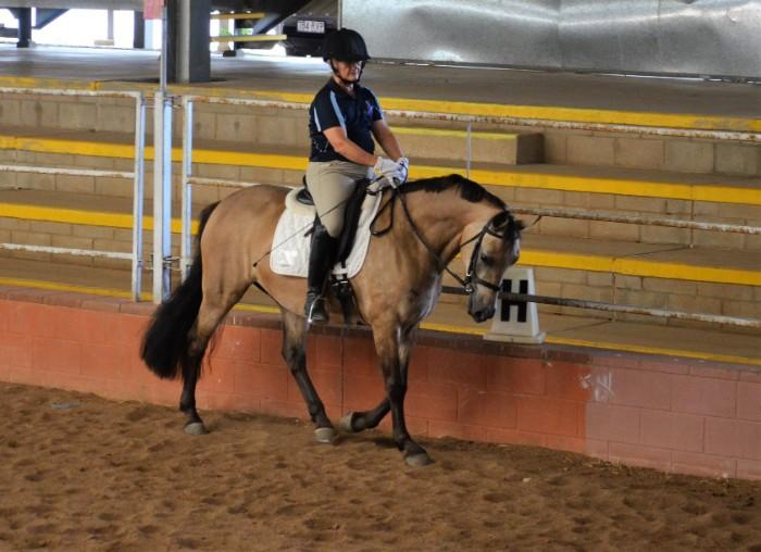 7yo Part Welsh Dressage Pony mare