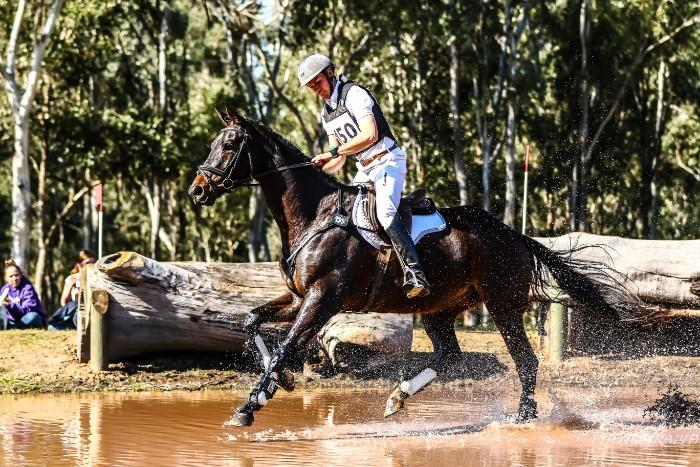 Sensational Young Eventing Prospect