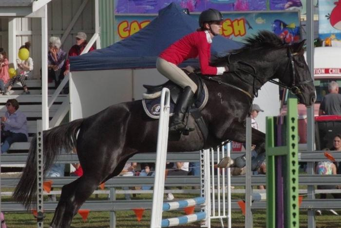 Competitive black showjumping schoolmaster