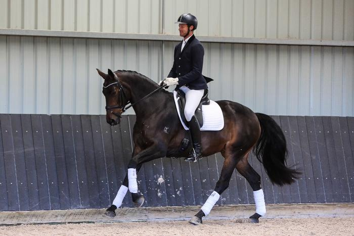 Impressive  medium level mare 8yo