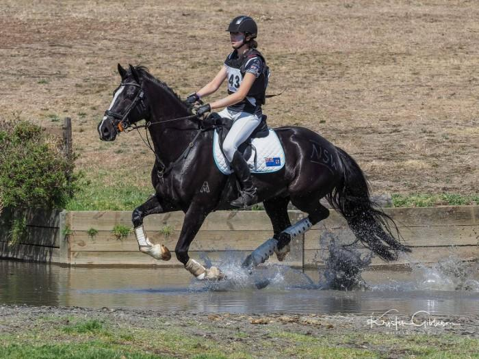 Talented Interschool/Eventing Gelding