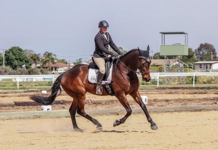 Stunning moving Warmblood Gelding