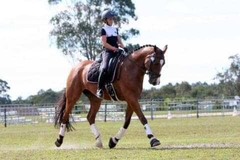 Warmblood Gelding !!!
