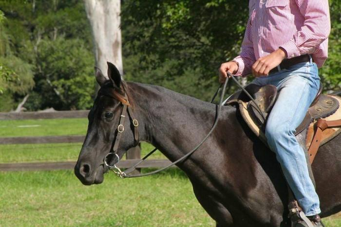 Quality 2 year old gelding
