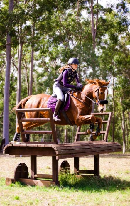 🌟Talented Interschool Eventing Horse🌟