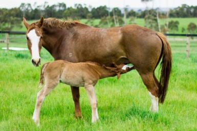 Whitney and Renegade Z Filly (2).jpg