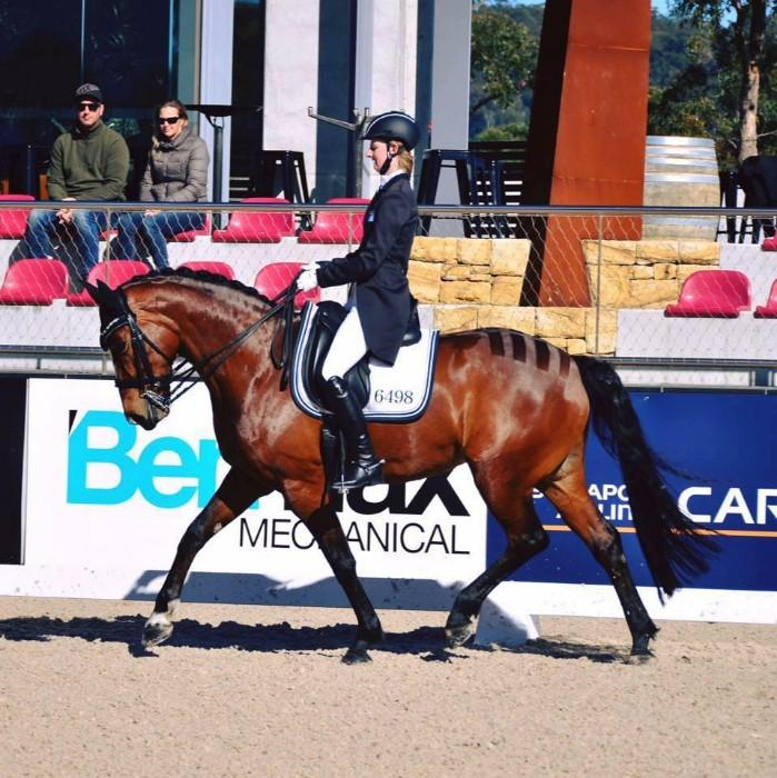 Reliable, Competitive FEI Schoolmaster