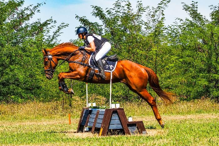 Super jumping/eventing prospect
