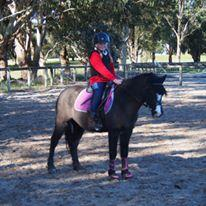 All Round Super Fun Pony
