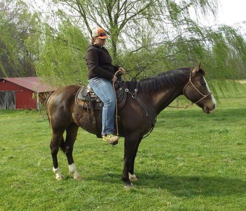 Adorable Quarter Horse  Available