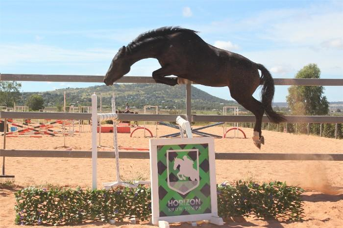 Exciting Diarado 4yo Mare
