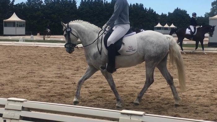 Outstanding Connemara Performance Pony