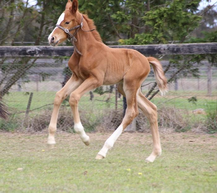 Outstanding Colt by Quaterhit-all imported lines