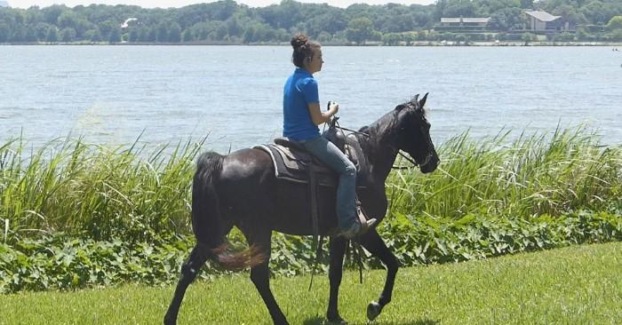 Clyde - Tennessee Walking Horse, Gelding for sal