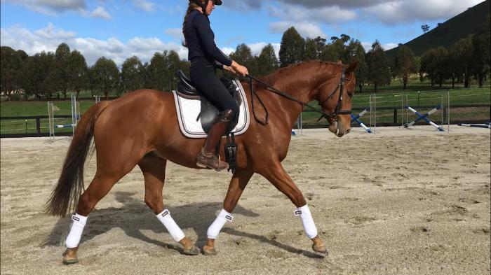 Lovely dressage/allrounder gelding