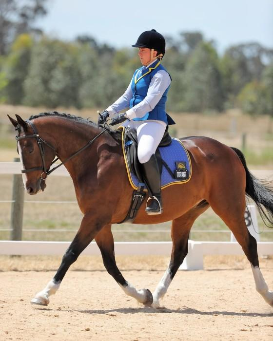 Beautiful, athletic small warmblood